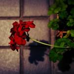 img2_thumb