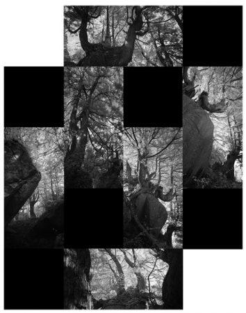 ひらく_Portraits of Woods